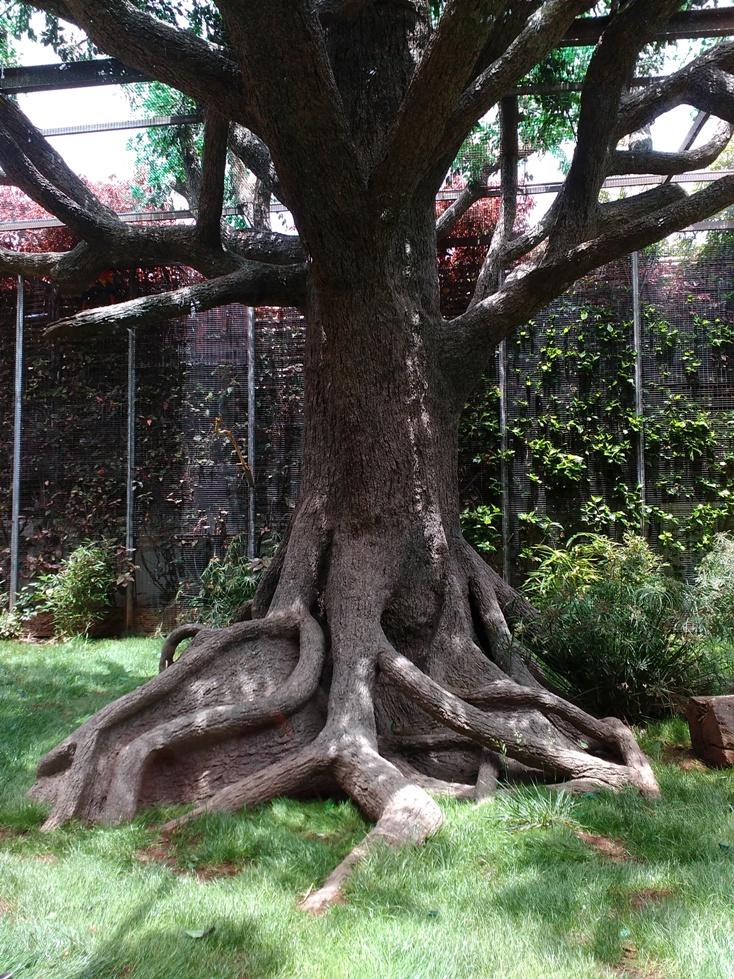 Opřete se o pevné kořeny v sobě