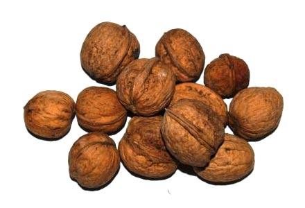 Ořechy » VLAŠSKÉ